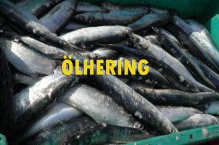 Ölhering